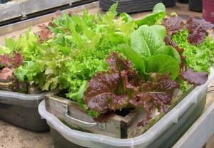 salad-table-4